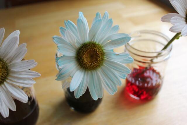 Dye Flowers