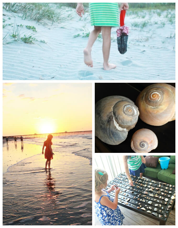 Ocean Crafts - Shell Collecting and Sorting 3