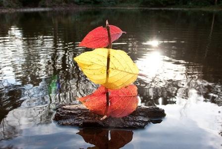 FloatingLeafBoat