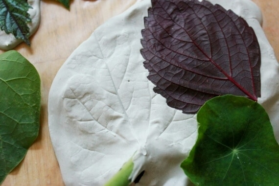 Leaf Casting with Plaster of Paris 23