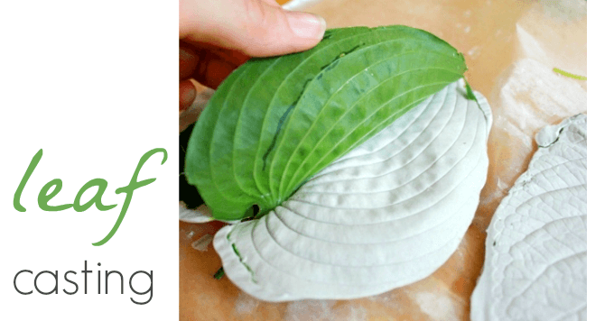 Leaf Casting With Plaster Of Paris For Gorgeous 3 D Leaves
