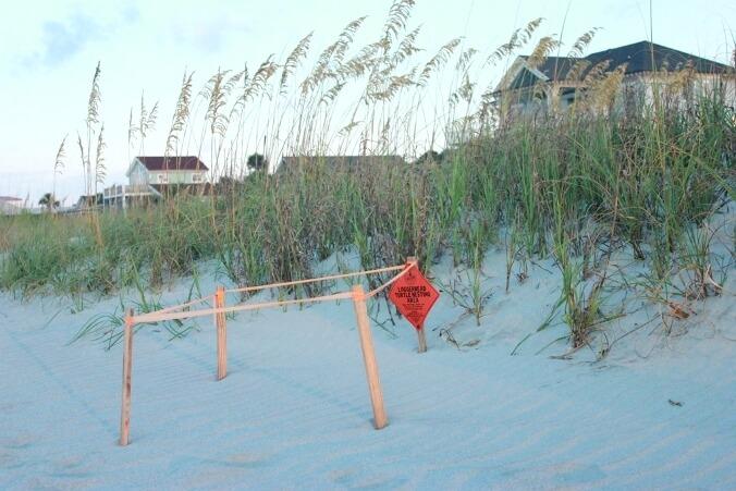 Loggerhead Turtle Nesting Areas on Folly Beach