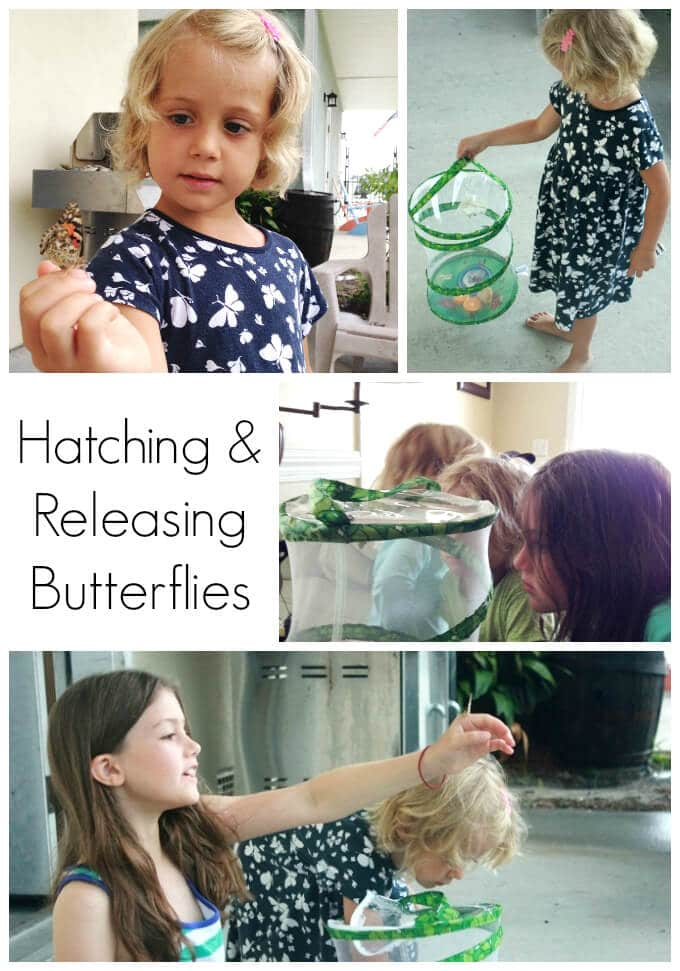 Ocean Crafts - Butterfly Hatching