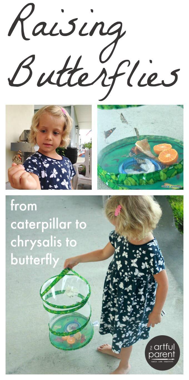 Raising Butterflies with Kids