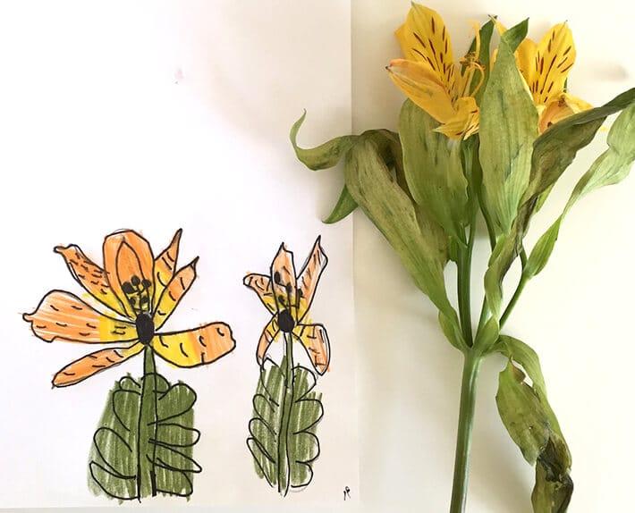 Nature inspired art – observational flower drawing for kids