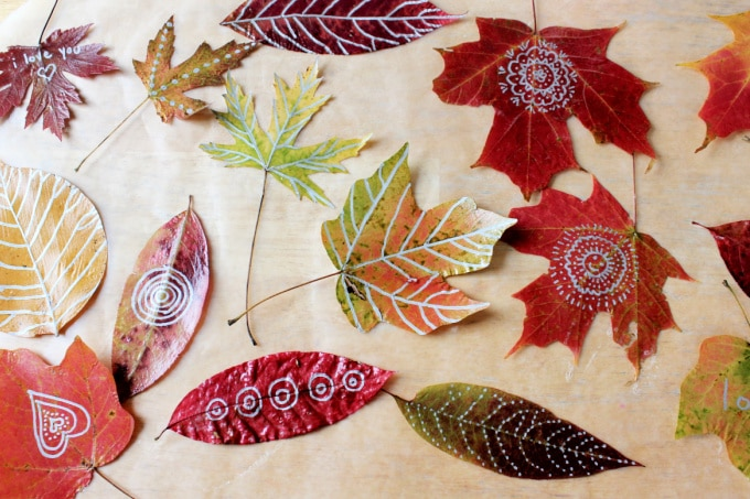 preserved leaves out on wax paper